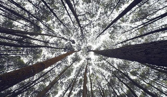 Trees - public domain